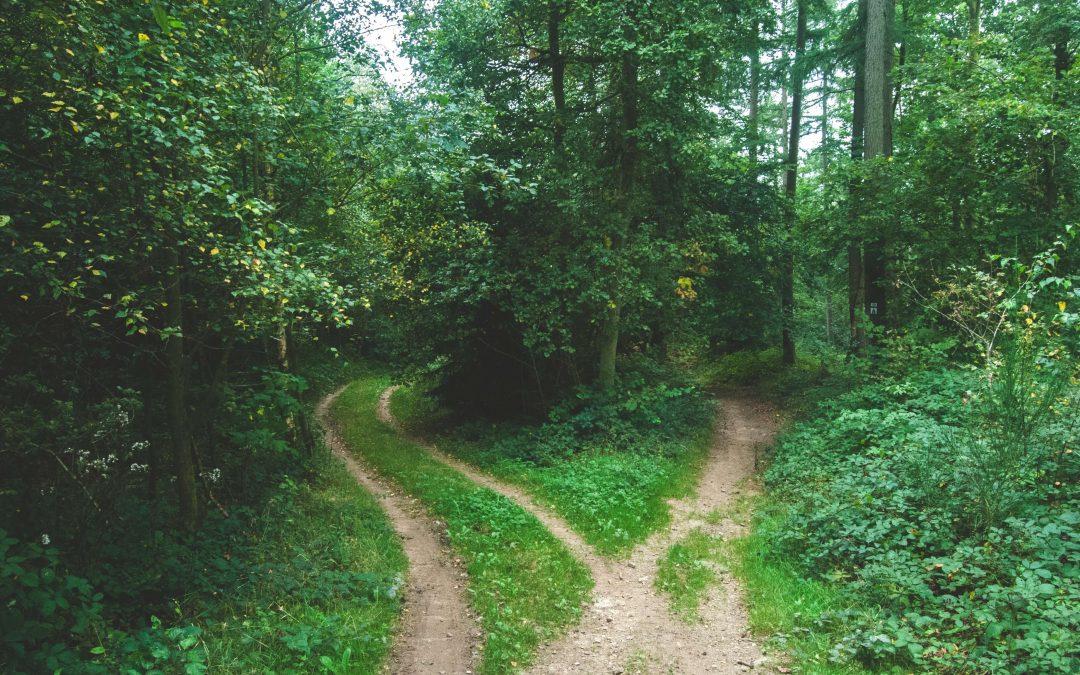 una strada che si biforca nel bosco