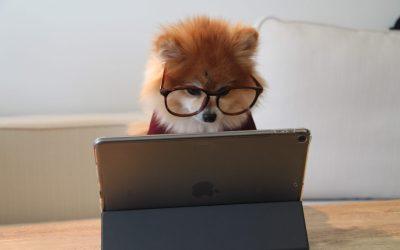 Consulenza di organizzazione on line. Come funziona?